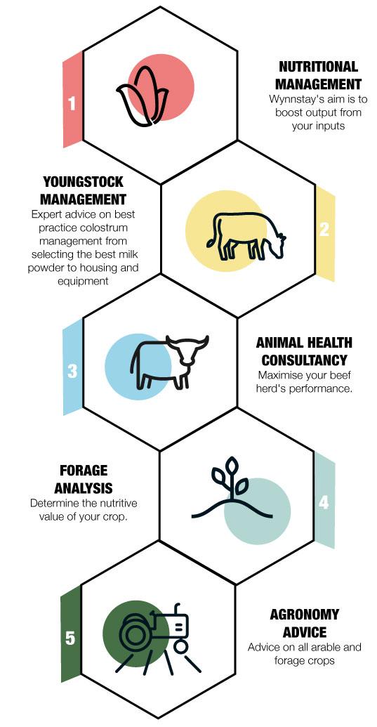 Beef Infographic