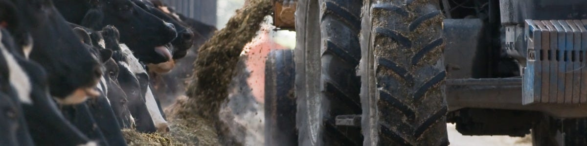 Maintain Performance with Variable First Cut Silages This Autumn