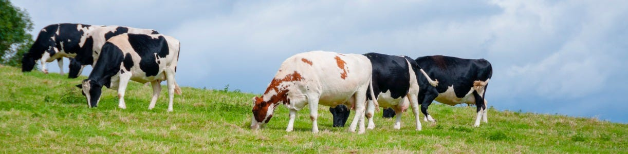 How to Identify Pica in Grazing Cattle