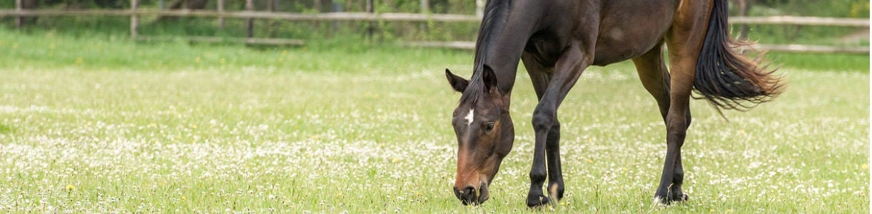 How to Reduce Sugar Intake In your Horse's Diet