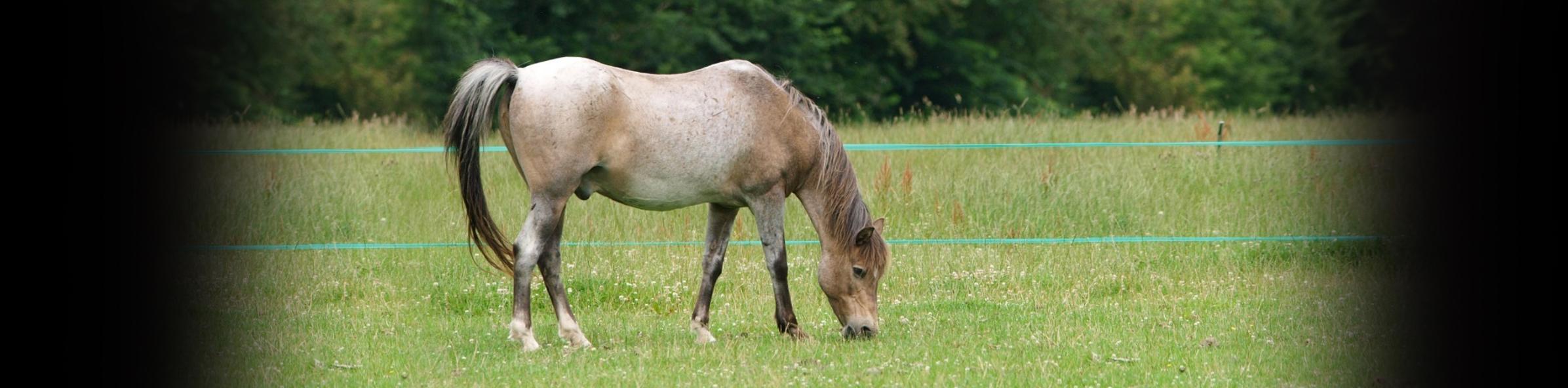 Care of the Veteran Horse