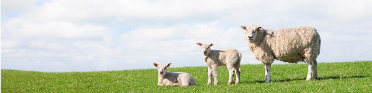 Flock Fertility