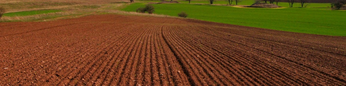 Spring Seed Agronomy Advice
