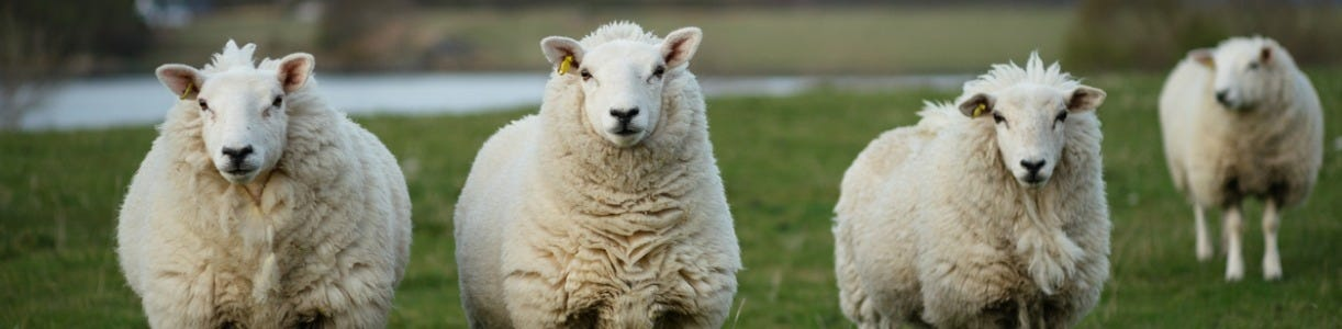 Tools to Help Inform Worm Treatment Choice in Sheep