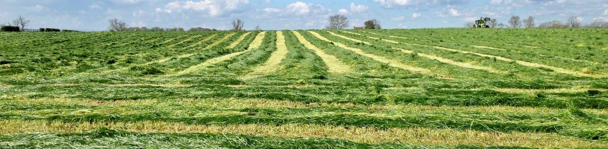 Research Points To Better Multi-Cut Silage