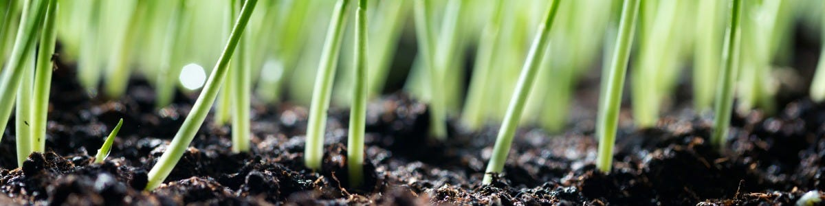 Reseeding - Why & How?