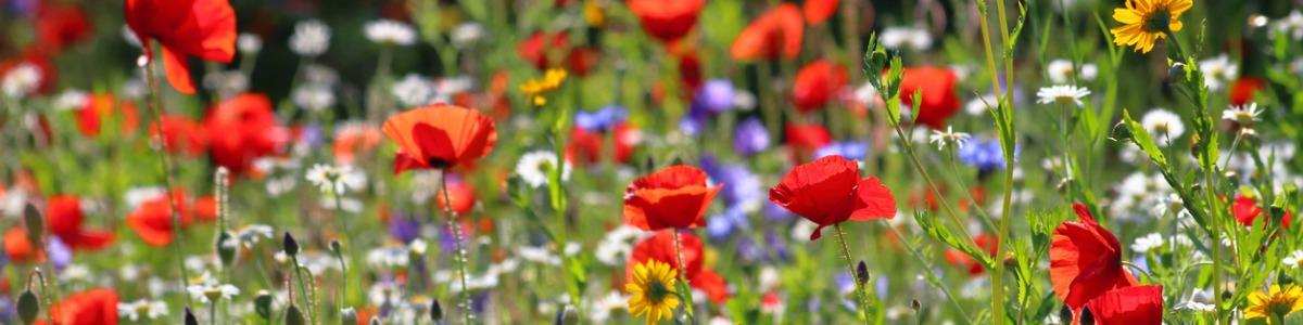 Wildflower Growing Guide