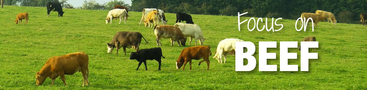 Beef Farming Blog | Wynnstay Agrihub