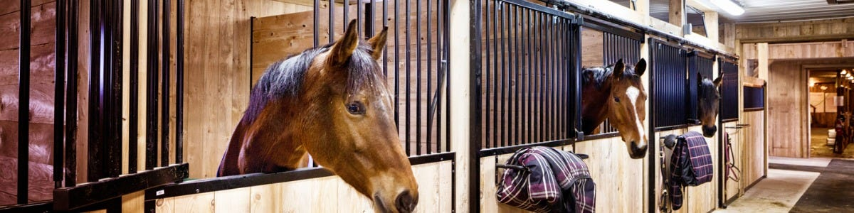 Which horse calmer supplement is best for bonfire night?