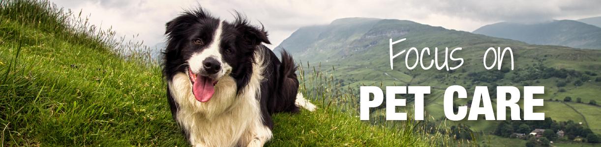 Pet Care Blog   Wynnstay Agrihub