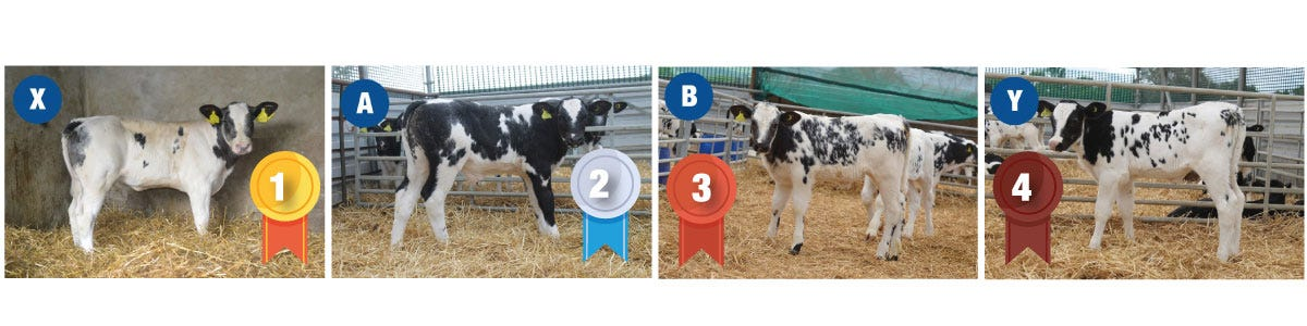 Calf Stock Judging Competition Results