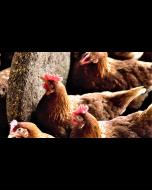 Natu-Pek Poultry Peck Block 15kg