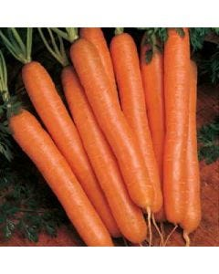 Country Value Carrot Nantes 5