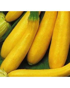 Country Value Courgette Goldena