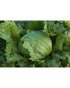 Country Value Lettuce Iceberg 2