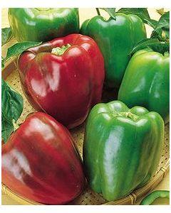 Country Value Pepper (Sweet) California Wonder
