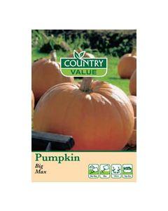 Country Value Pumpkin Big Max