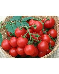 Country Value Tomato Red Cherry Seeds