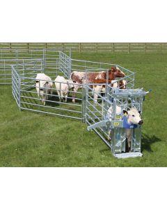IAE Portable Cattle Handling Starter Kit