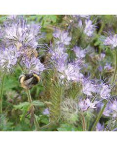 Bee Mixture