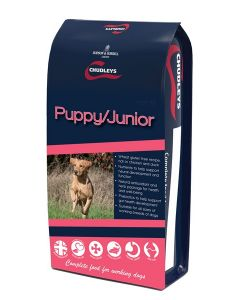 Chudleys Puppy/Junior
