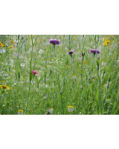 Pro Flora Cornfield Annuals Wildflower Seed