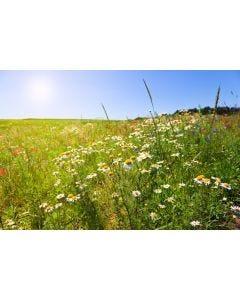 Pro Flora Country Meadow Mix General Purpose Wildflower Seed