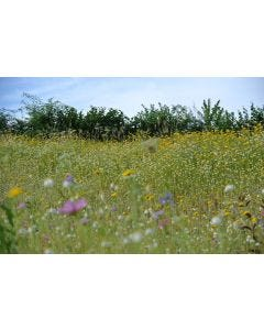Pro Flora Country Meadow Mix & Annuals Wildflower Seed