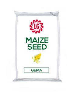 Gema Maize Seed