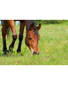 Horse and Pony Herb Grass Seed Mix
