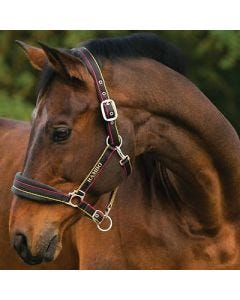 Rambo padded headcollar pony witney