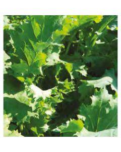 Interval (Rape/Kale Hybrid)