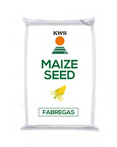 Fabregas Maize Seed