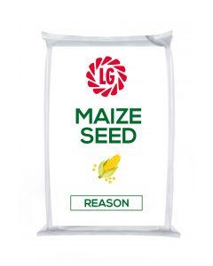 Reason Maize Seed