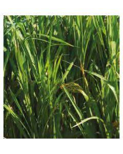 Magic Millet