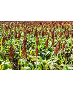 Red Millet Seed Mix 5kg