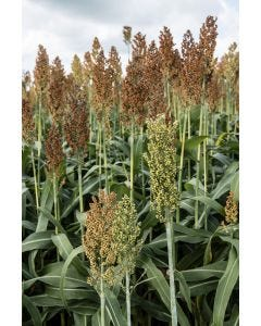 Top Flush Millet Seed Mix 10 Kilo