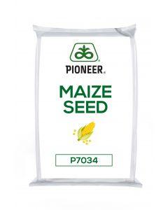 P7034 Maize Seed