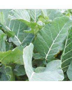 Kale Safe Blend
