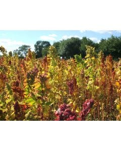 Quinoa Seed Mix