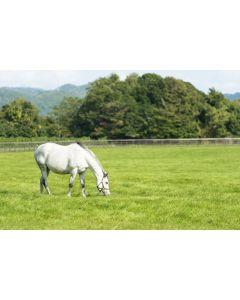 No Ryegrass Horse & Pony Grass Seed Mix