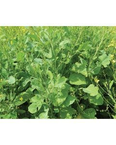 Texcel Green Seed Mix