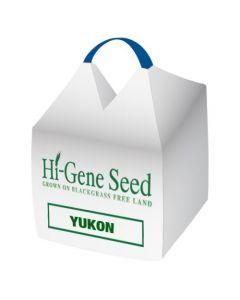 Yukon Spring Oats Seed