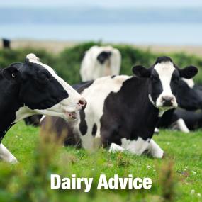 Dairy Advice