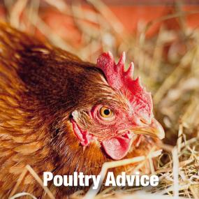 Poultry Advice