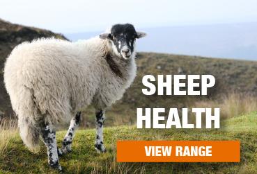 Sheep Health