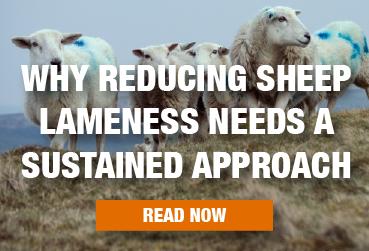 Lameness Blog