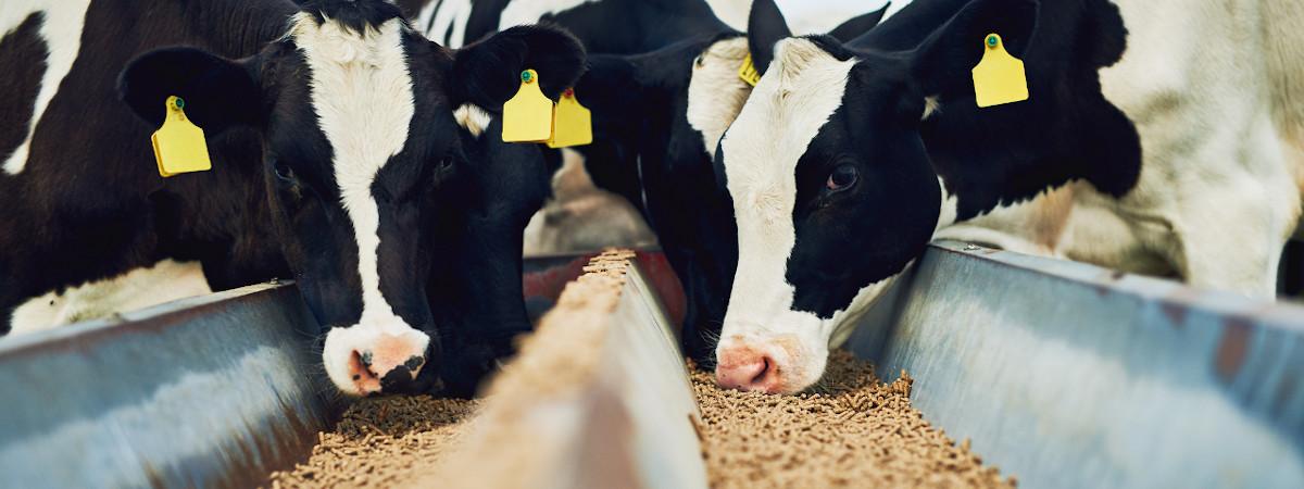 Wynnstay Animal Feed