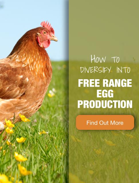Free Range Egg Production
